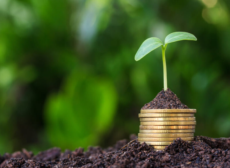 """Come trovare finanziamenti """"seed"""" e fondare la propria futura big tech"""